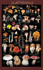 Mushrooms of the Forest Floor Poster